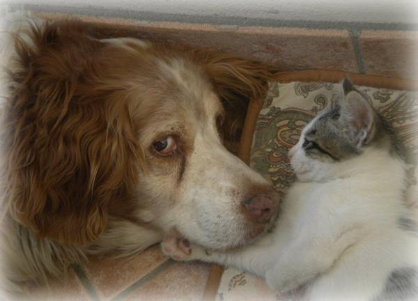 Il vecchio Argo e il gattino Leone