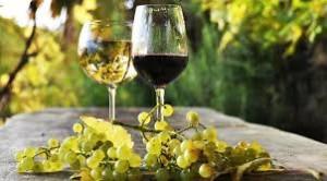 vino uva enogastronomia