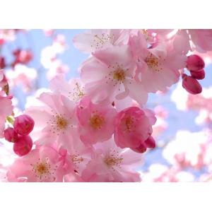 aprile fiori