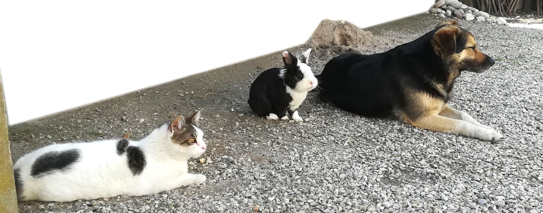 La compagnia degli animali sfigati