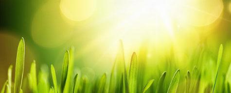 Primavera erba e sole